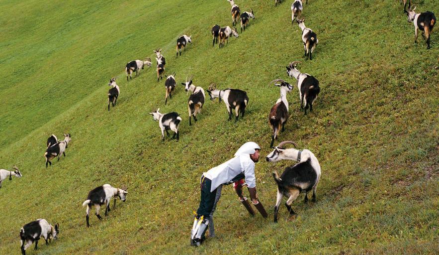 thomas-cabras